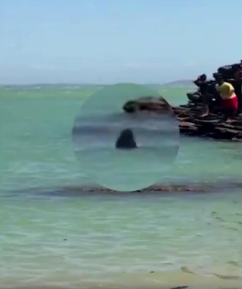 Aparição de tubarão assustou turistas em João Fernandinho